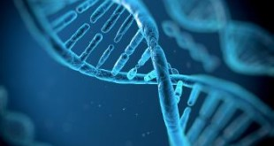 transfer gene