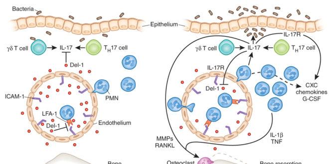 cytokines2