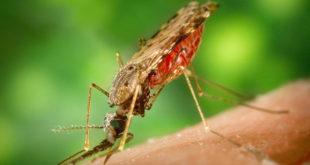 Zika-Test