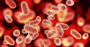 Periodontal disease and coronary artery disease share genetic basis