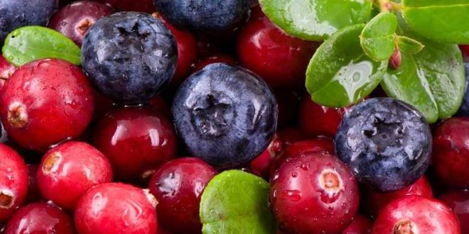Study indicates potential of berry extract to fight off dental bacteria
